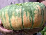 Specialty Winter Squash