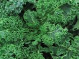 Open Polinated Kale