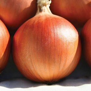 Commercial Onion Growers Resources